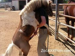 Horny pony naughty xxx zoophilia sex tape
